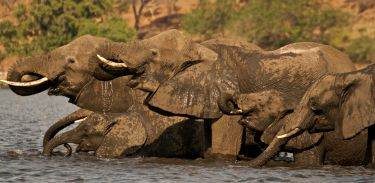 Fotosafari v Botswaně